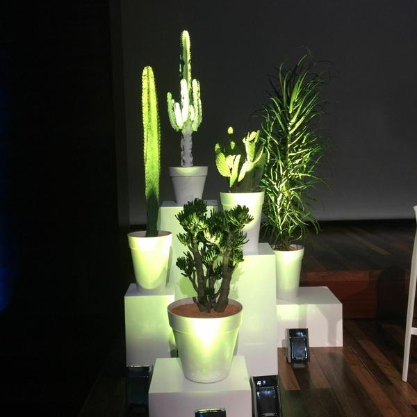 Location de plantes 2