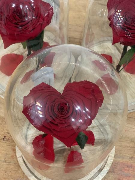 Rose éternelle cœur