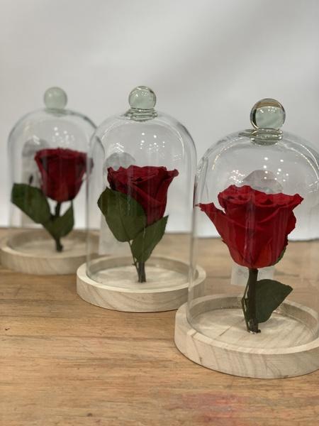 Rose éternelle S